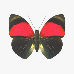 3D agrias claudina butterfly