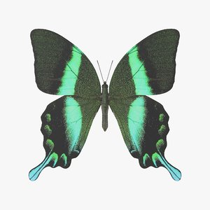 3D model green papilio swallowtail butterfly