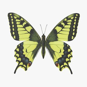 3D papilio swallowtail butterfly model