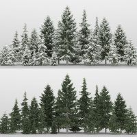 20+20 Serbian Spruce Trees