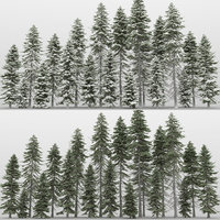 20+20 Picea Abies Trees