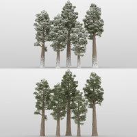 5+5 Sequoia Trees