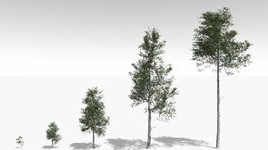 quaking aspen tree growth 3D model