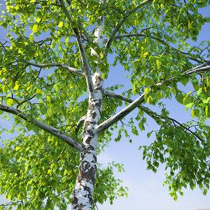 birch tree grass scatter model