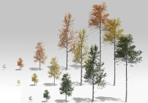 quaking aspen tree growth model