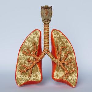 3D lungs trachea larynx