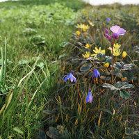 Spring grass set V1