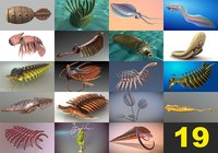 cambrian animals 19 in 1 collection