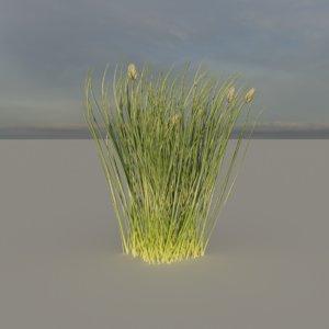 chives plant 3D model