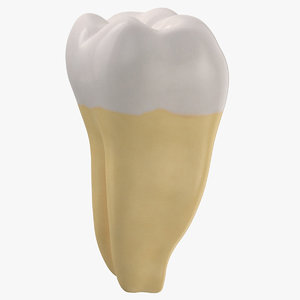 3D molar lower jaw right