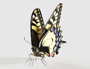 3D realistic swallowtail butterfly insect