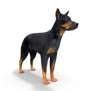 3D beauceron dog
