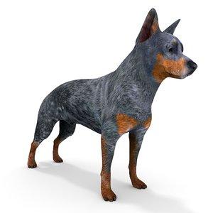 australian cattle dog anime 3D model