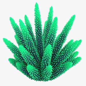 3D coral 1 l model