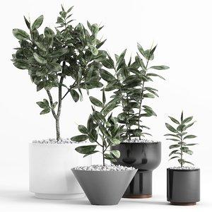 3D ficus elastica plant planters