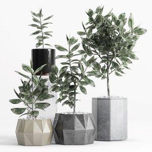ficus elastica plant planters 3D model