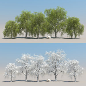 3d model 5 willow tree