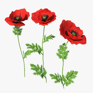 3D blooming poppy flower set model