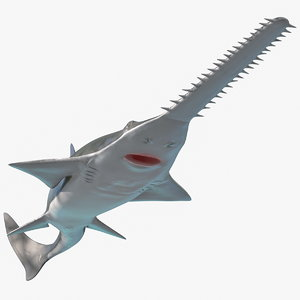 3D model sawfish attack pose fish