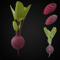 Beet root vegetable PBR 3d model