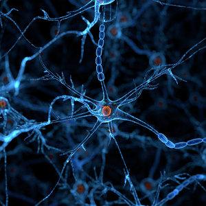 3D neural cells axon
