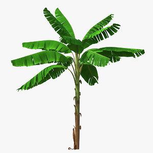 tall banana tree 3D model