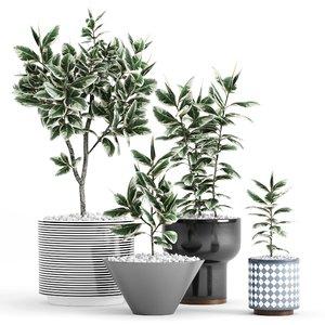 3D ficus elastica plant planters model