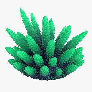 3D coral 2 s