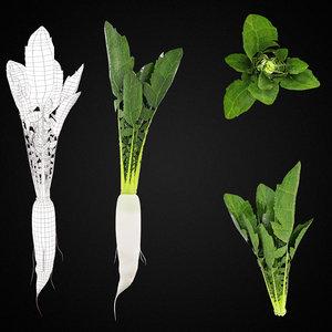 raddish green leaf vegetable 3D