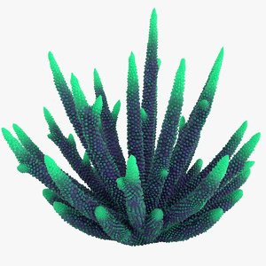 coral 3 l 3D model