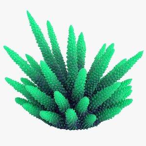 coral 2 m 3D model