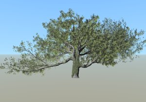 3D live oak