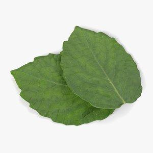 mint leaves pbr model