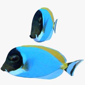 surgeonfish picasso surgeon 3D model