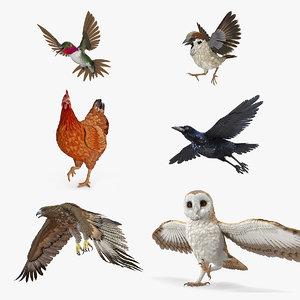 3D model rigged birds 2