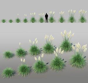 3D pampas grass cortaderia selloana