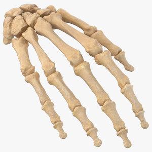 3D human hand bones anatomy