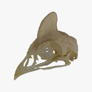 helmeted guineafowl numida meleagris 3D model