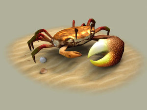 fiddler crabs hai river 3D model