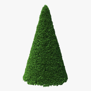 3D pyramidal green mountain boxwood