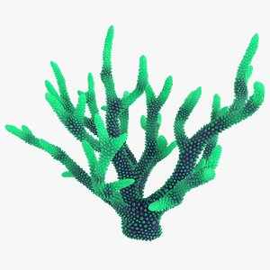 coral 4 l 3D model