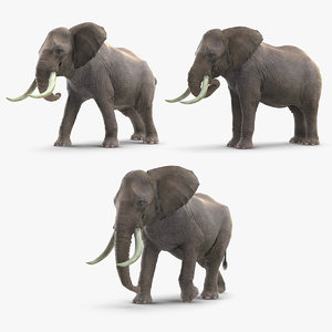 3D elephants mammal animal