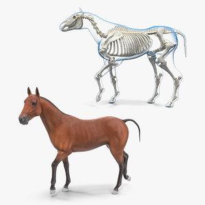 horse skeleton rigged 3D model