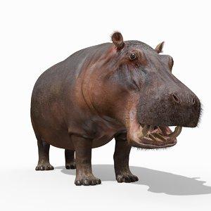 hippo 8k animation 1 3D model
