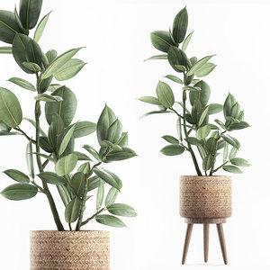 3D decorative interior baskets ficus