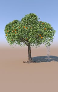 mature mandarin tree citrus 3D