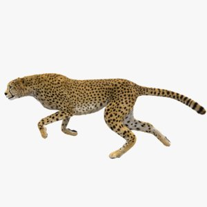 3D cheetah fur animation