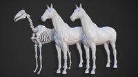 Animal - Horse Anatomy Skin Ecorche Base Body