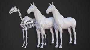 animal horse anatomy skin model