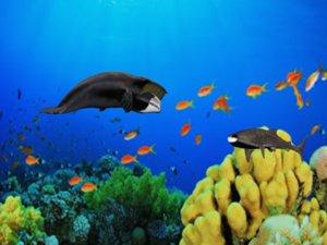 bowhead whale shark 3D model